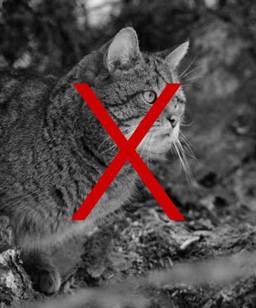 vanatoare-pisica-salbatica-wildhunting-romania