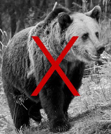 vanatoare-urs-wildhunting-romania
